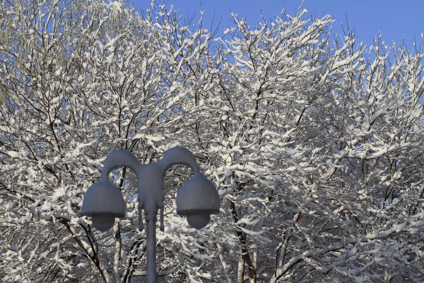 春天的雪_图1-13