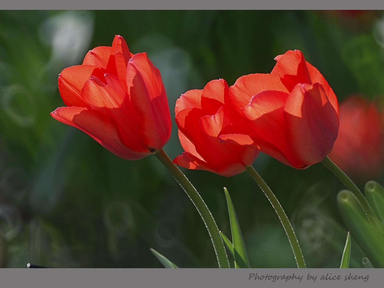 欢笑的春花之二_图1-2