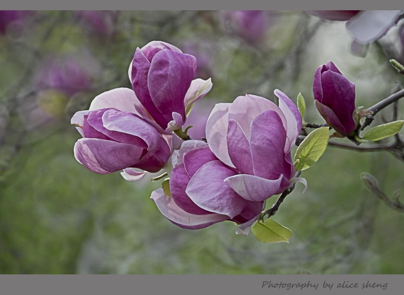 欢笑的春花之二_图1-3