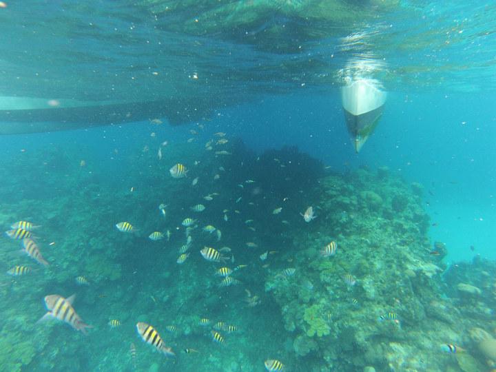 【原创】女儿的留学生活-----春假乘邮轮远航加勒比_图1-50
