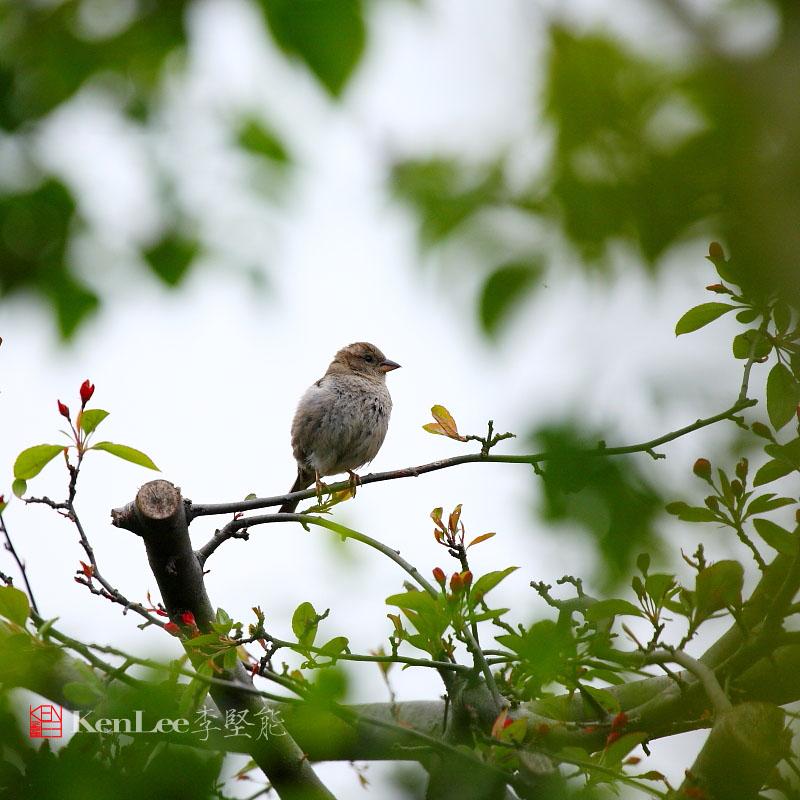 [Ken Lee] 我家花园鸟语花香_图1-18