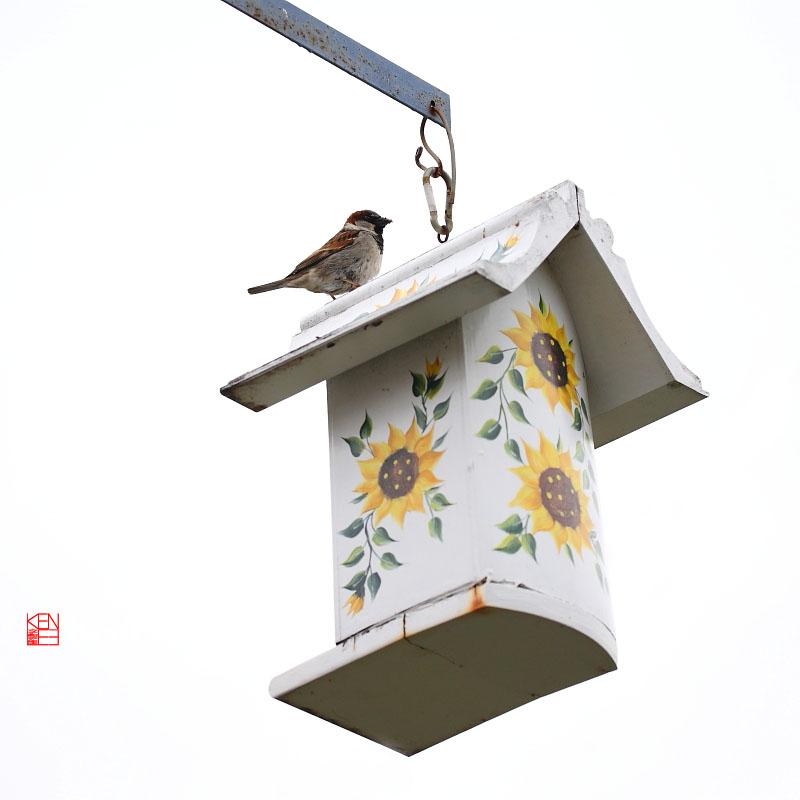 [Ken Lee] 我家花园鸟语花香_图1-15