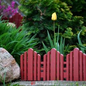 [Ken Lee] 我家花园鸟语花香