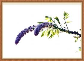 【star8拍攝】紫藤花