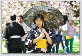 第三十二届brooklyn樱花节