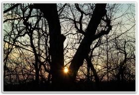 月影.为什么太阳总是下到山那
