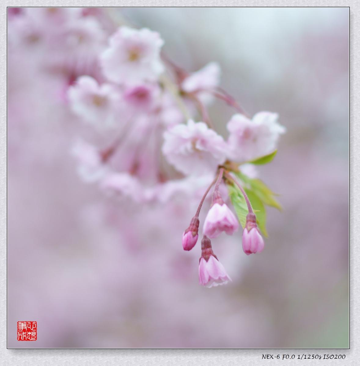 春意绵绵_图1-7
