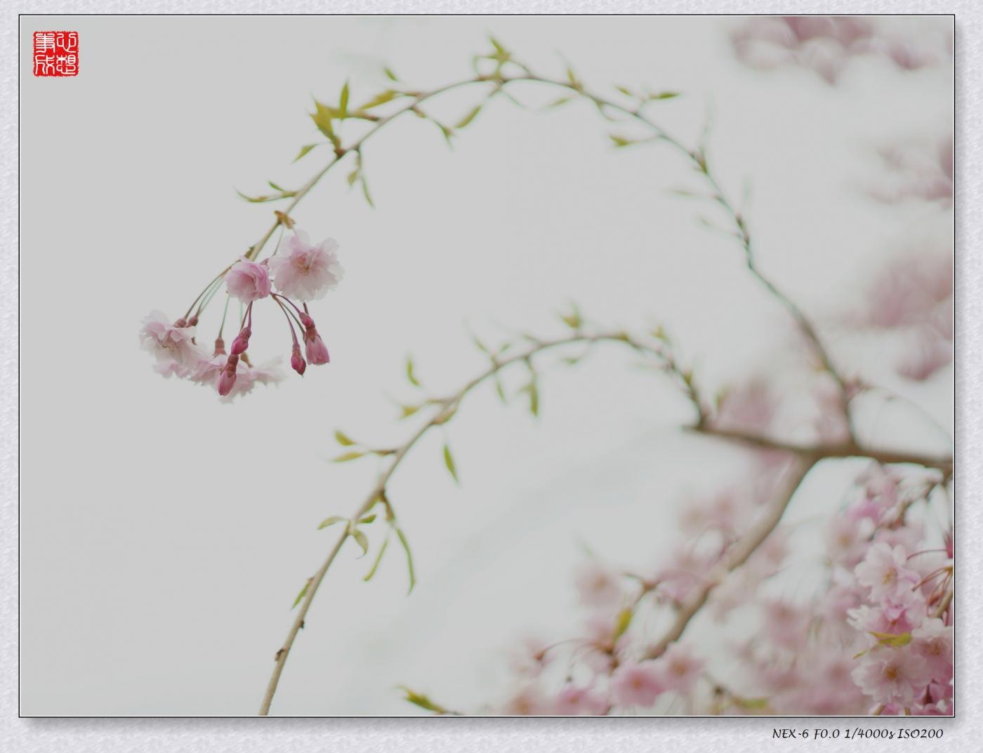 春意绵绵_图1-8