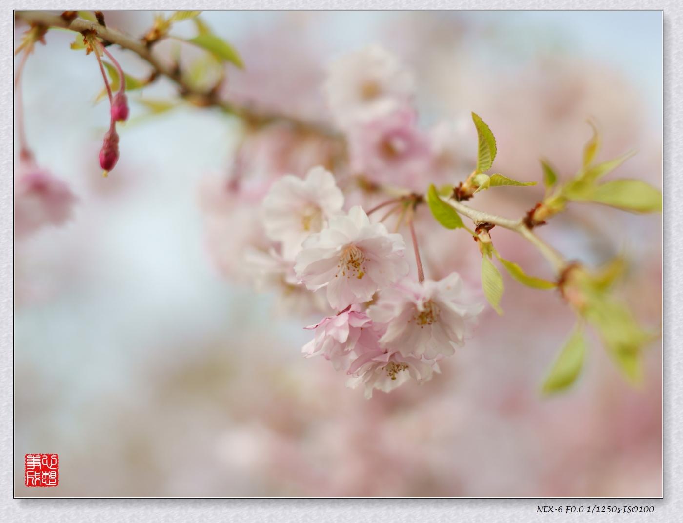 春意绵绵_图1-6