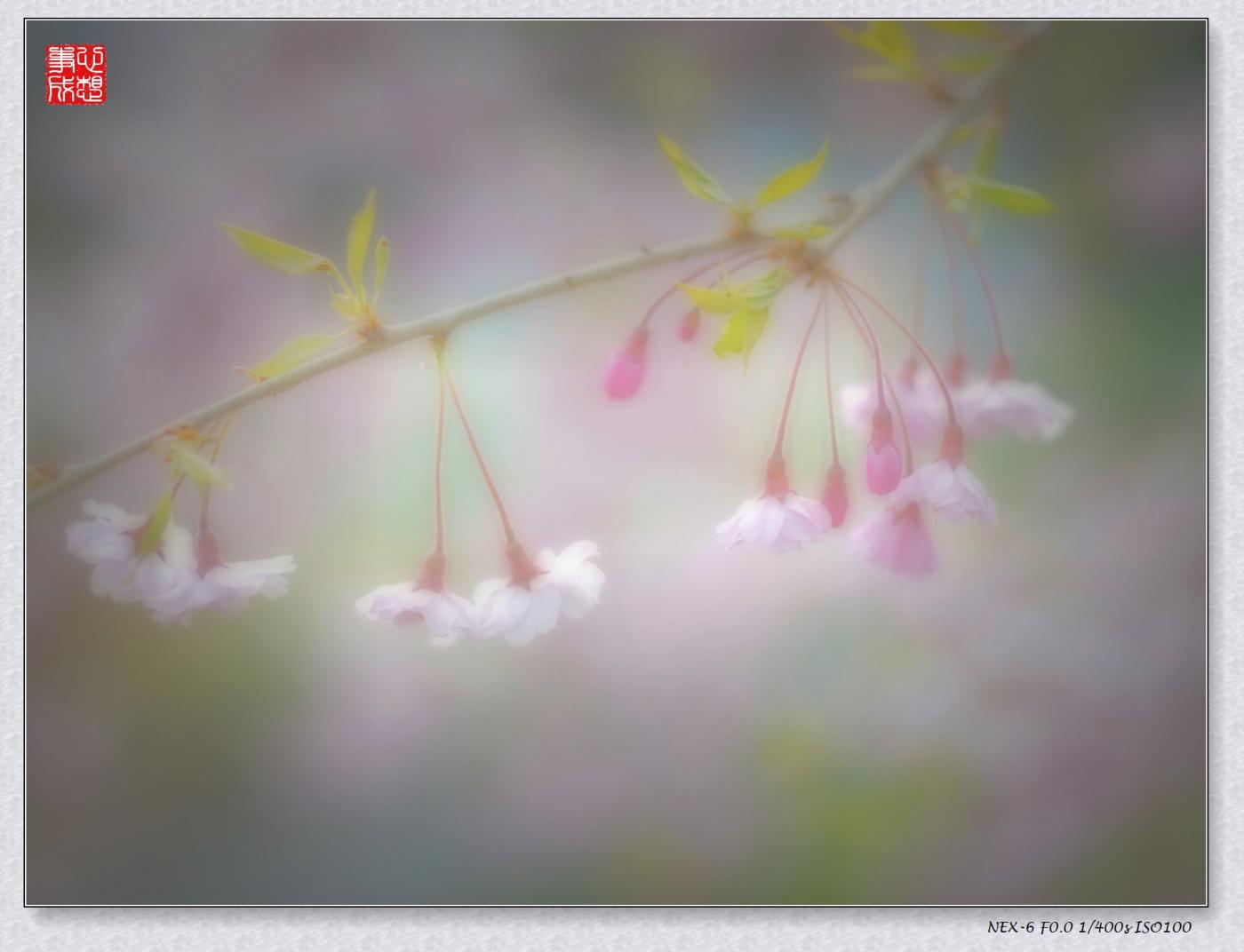 春意绵绵_图1-3