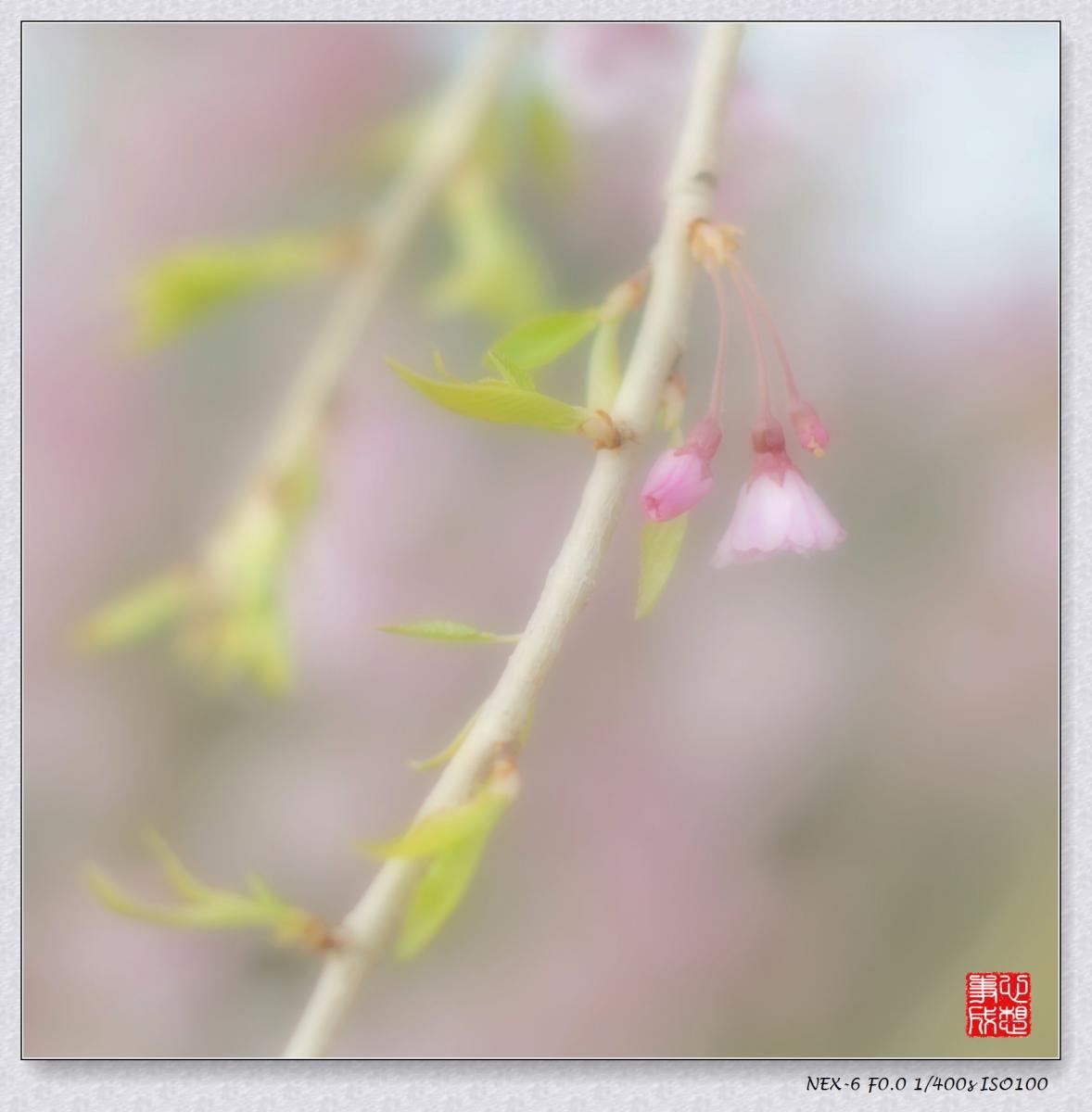 春意绵绵_图1-4