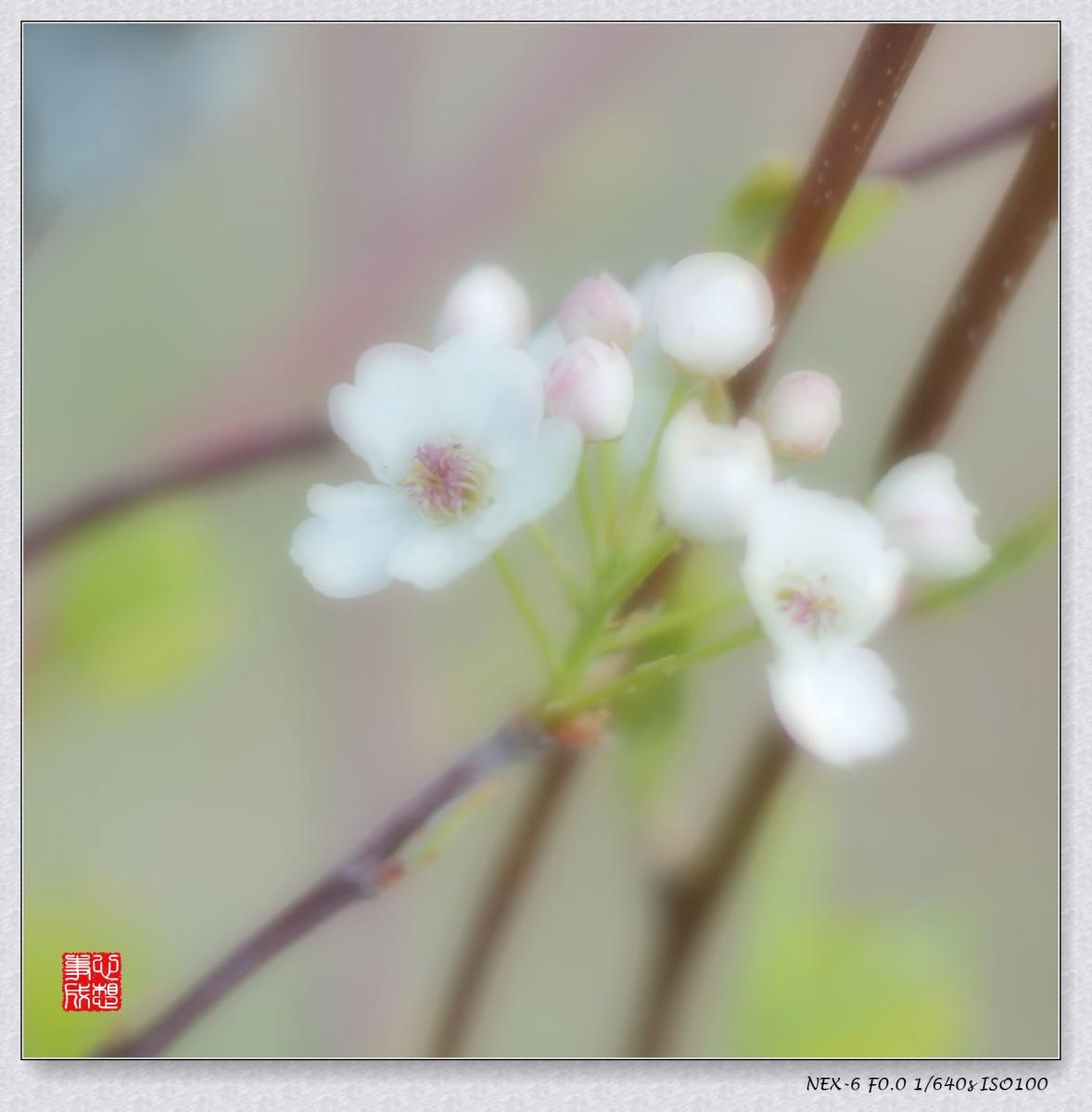 春意绵绵_图1-5