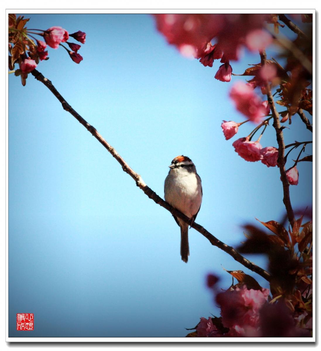 【心想事成】春鸟图随拍_图1-3