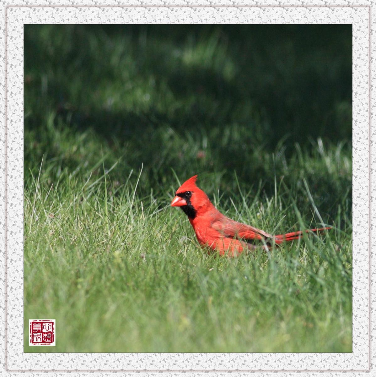 【心想事成】红衣教主鸟_图1-5