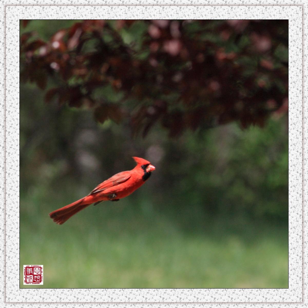 【心想事成】红衣教主鸟_图1-7