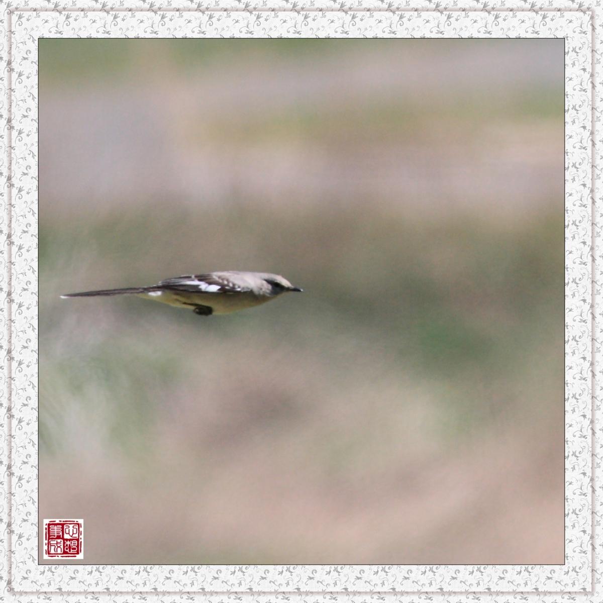 【心想事成】红衣教主鸟_图1-11
