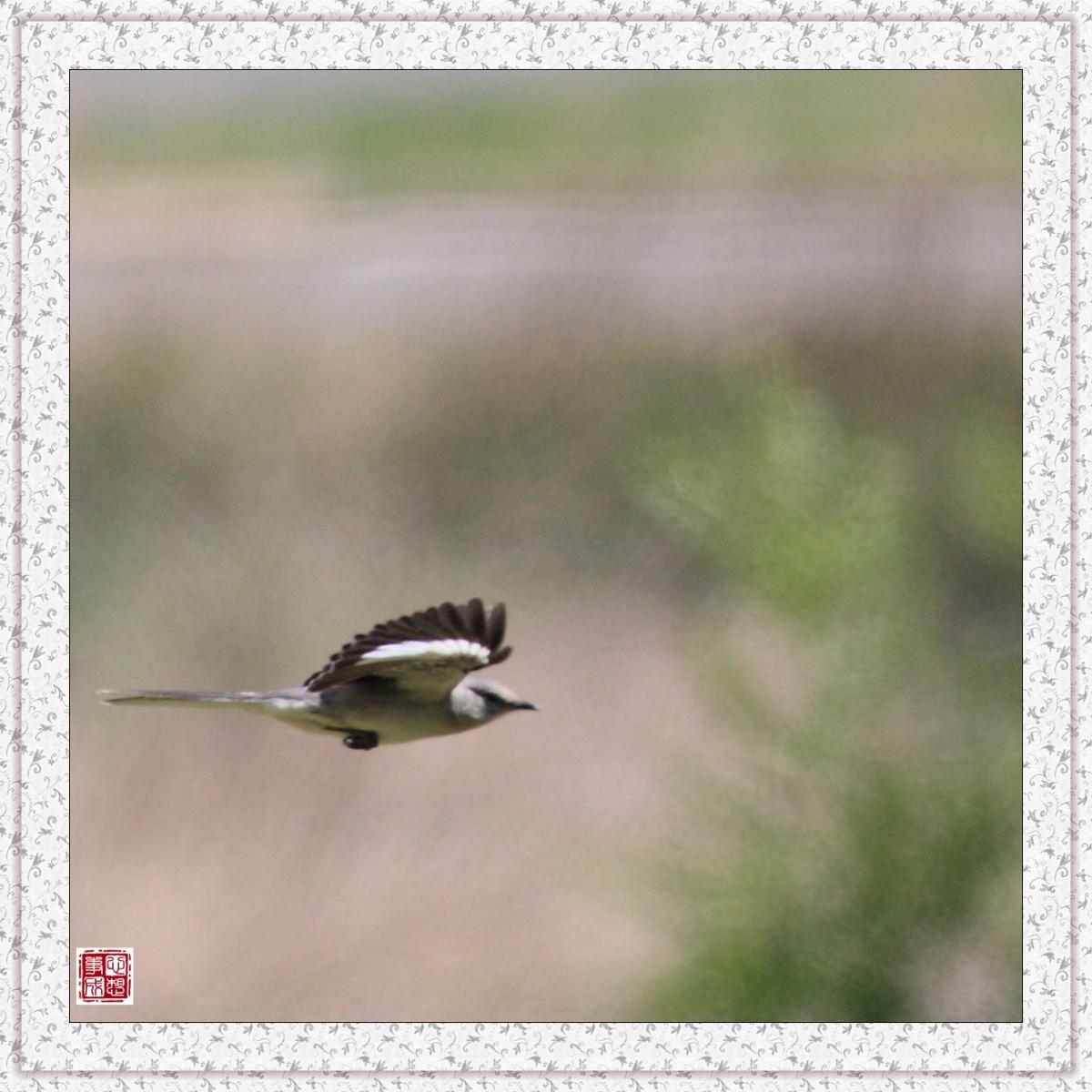 【心想事成】红衣教主鸟_图1-9