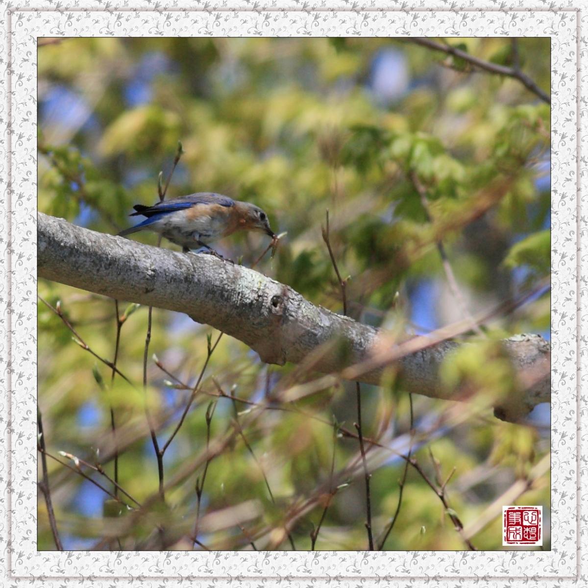 【心想事成】红衣教主鸟_图1-14