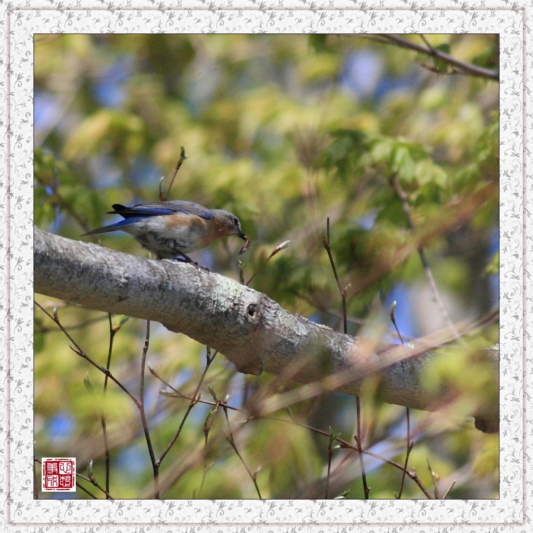 【心想事成】红衣教主鸟_图1-13
