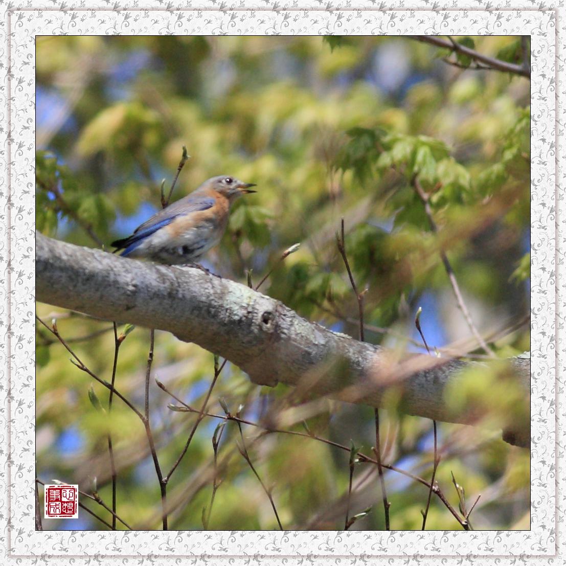 【心想事成】红衣教主鸟_图1-12
