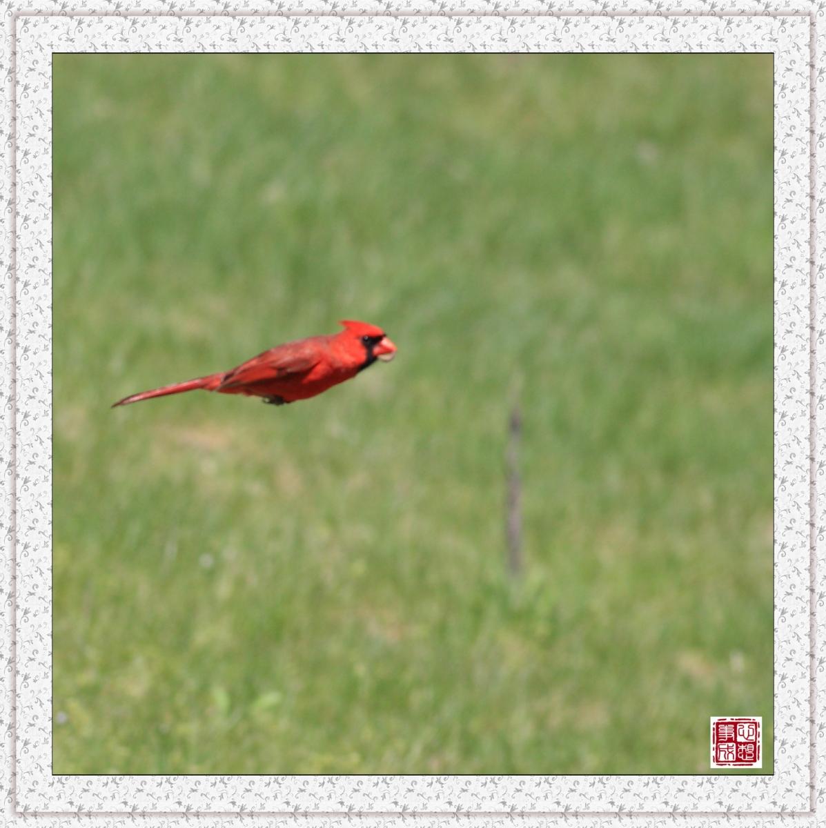 【心想事成】红衣教主鸟_图1-8