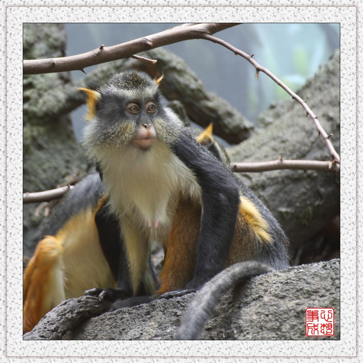 【心想事成】 人类的祖先?BRONX 动物园随拍_图1-12