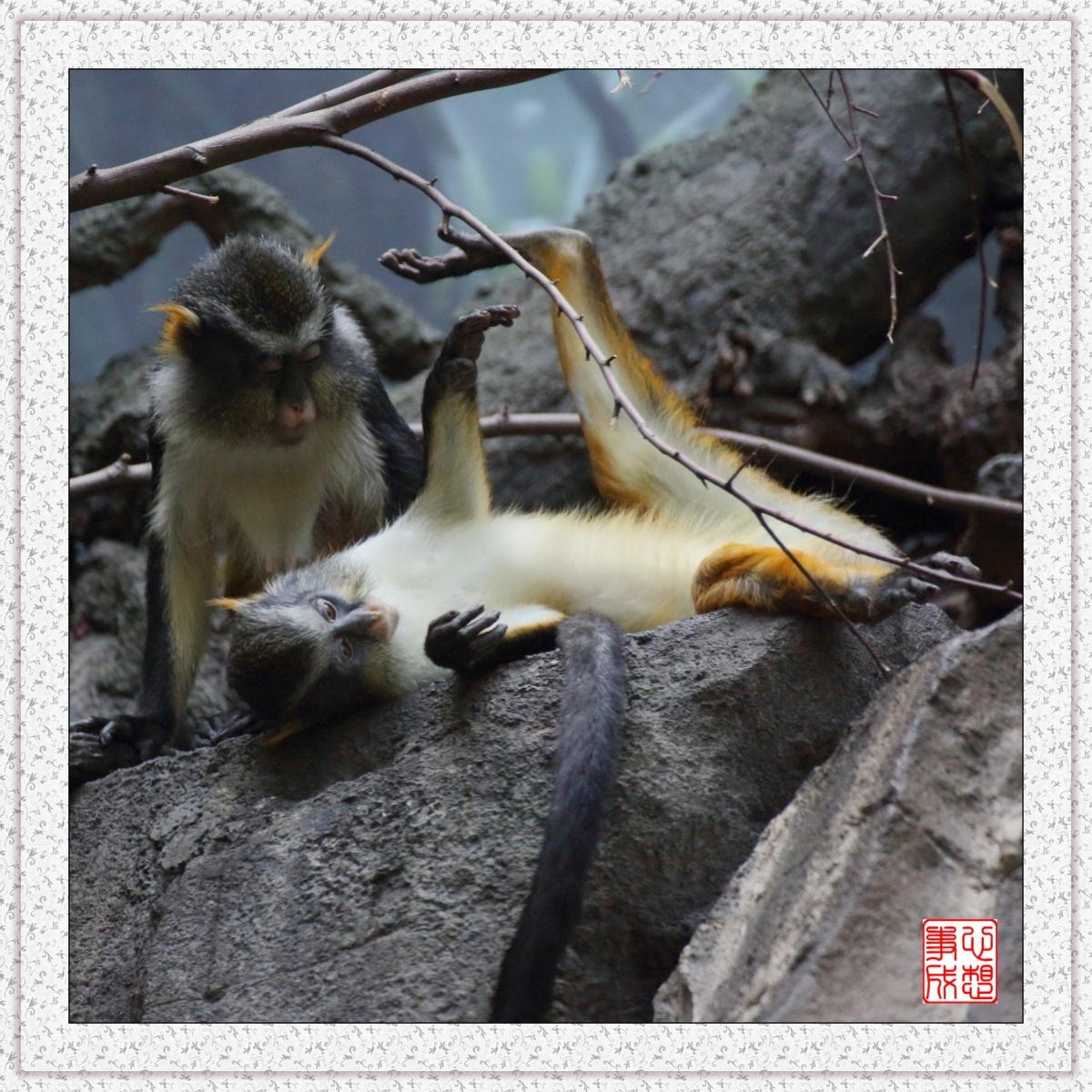 【心想事成】 人类的祖先?BRONX 动物园随拍_图1-11