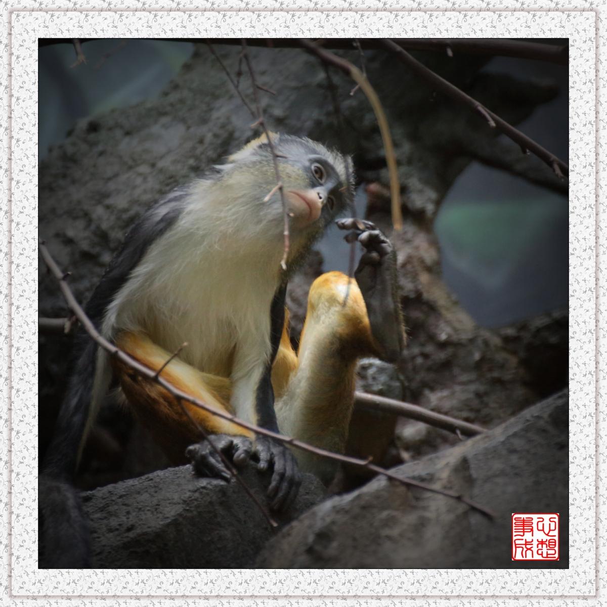【心想事成】 人类的祖先?BRONX 动物园随拍_图1-10