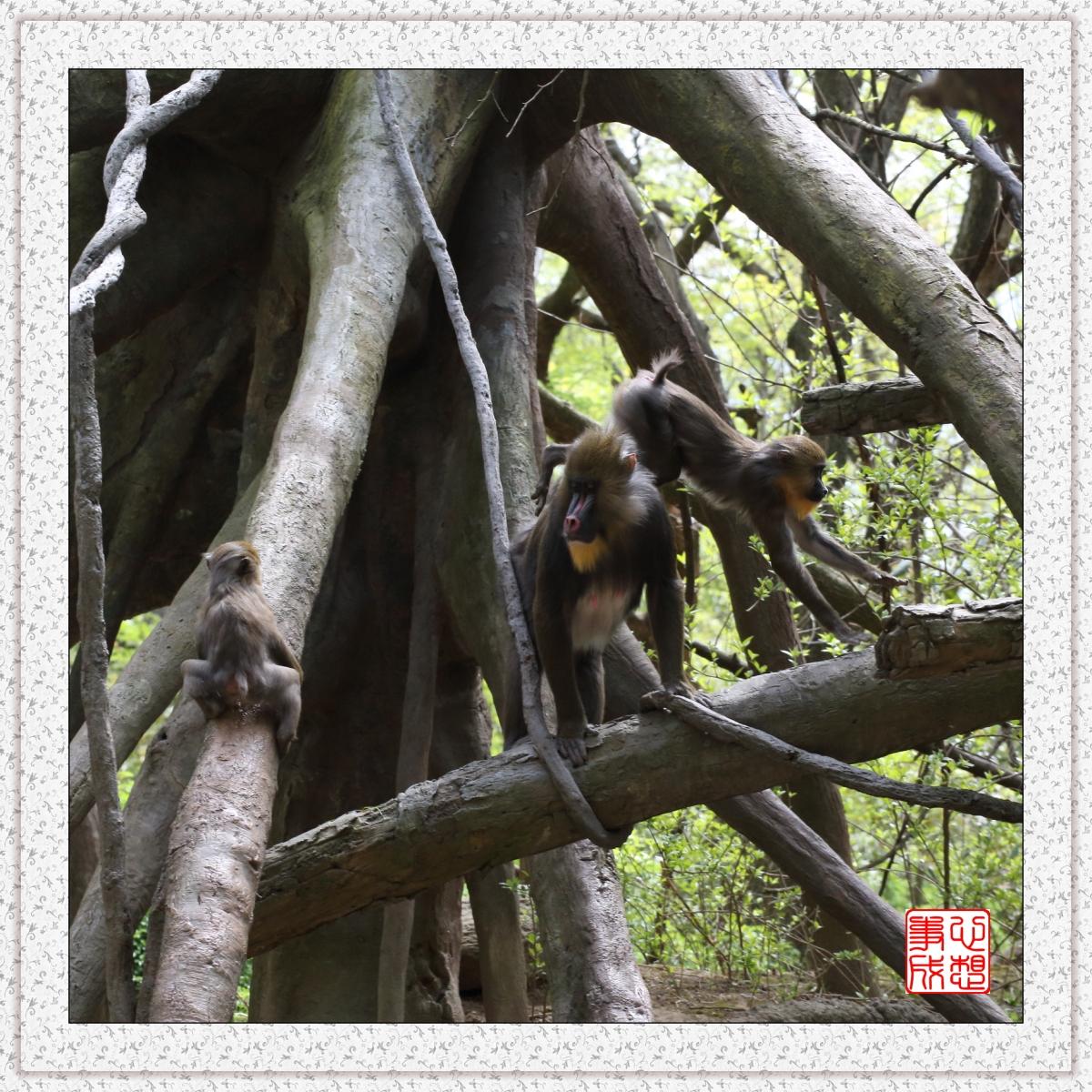【心想事成】 人类的祖先?BRONX 动物园随拍_图1-5