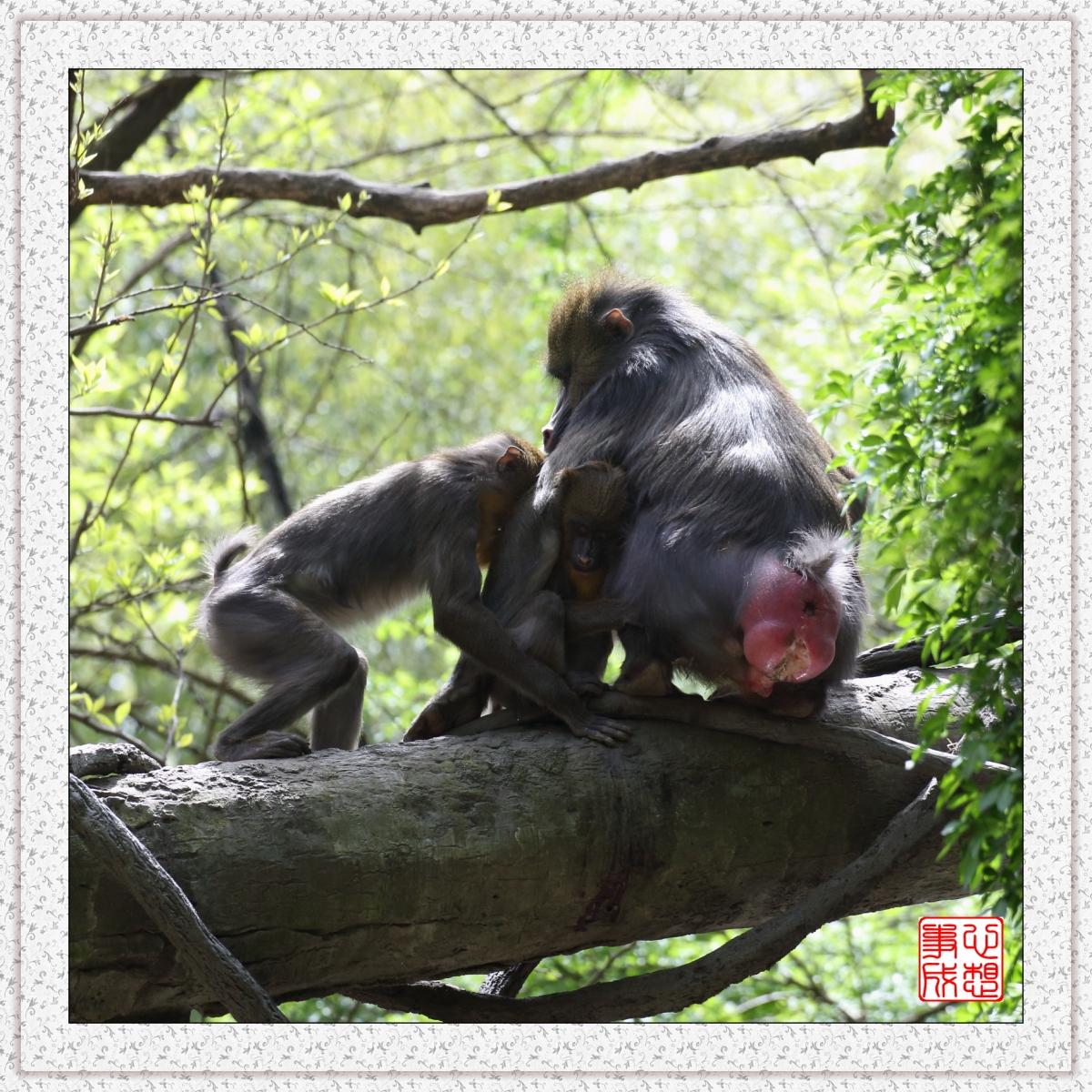 【心想事成】 人类的祖先?BRONX 动物园随拍_图1-4