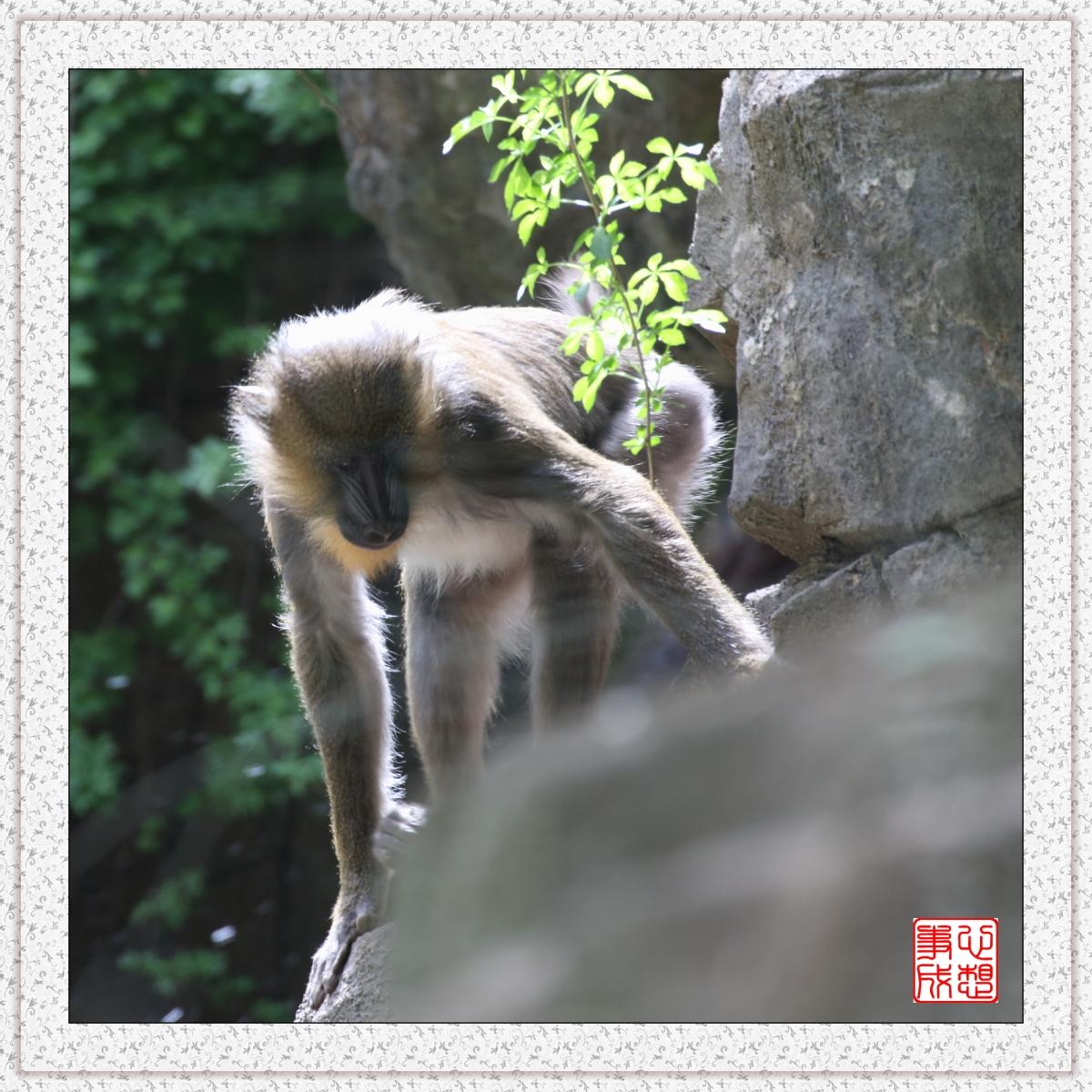 【心想事成】 人类的祖先?BRONX 动物园随拍_图1-6