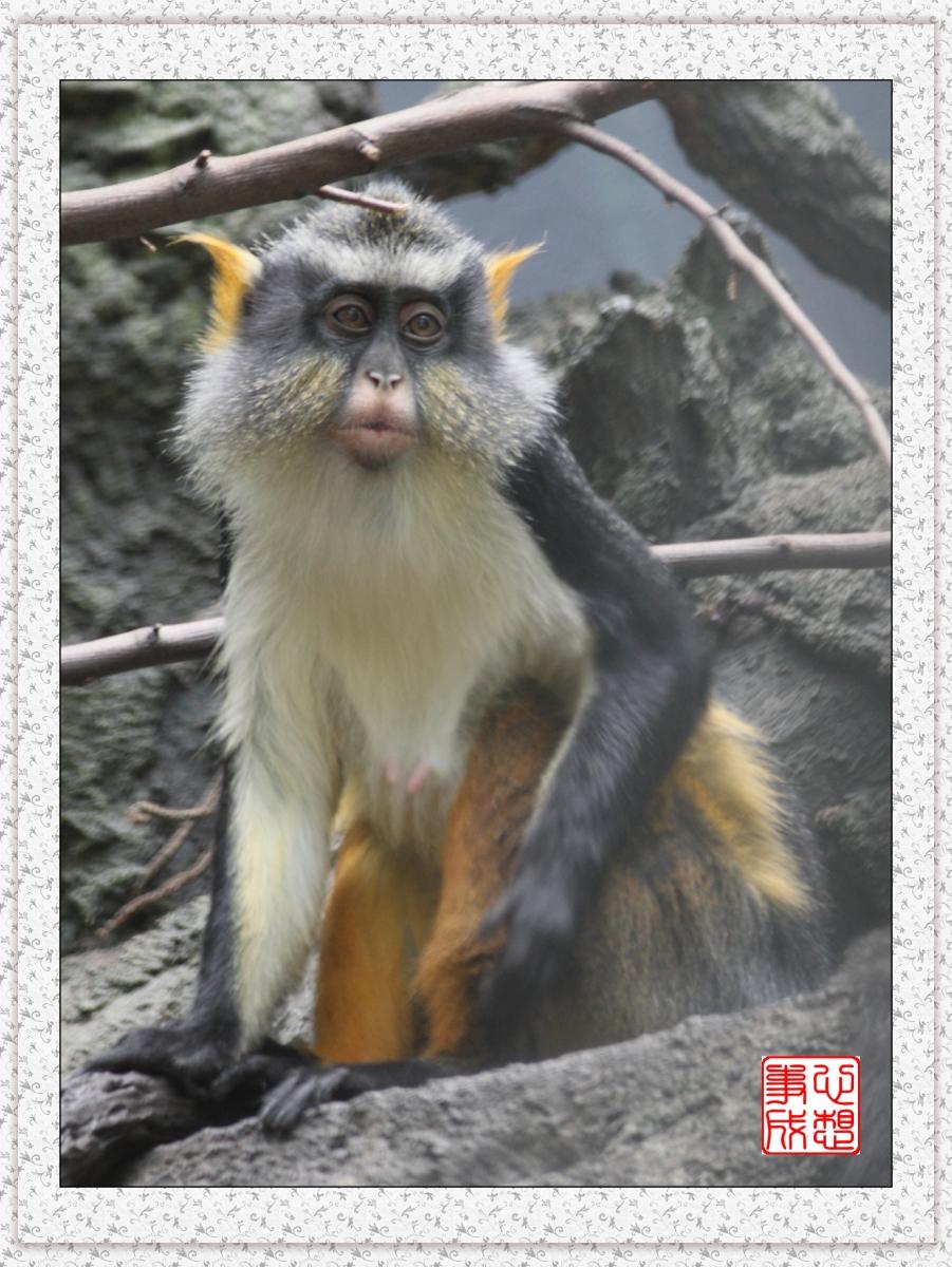 【心想事成】 人类的祖先?BRONX 动物园随拍_图1-7