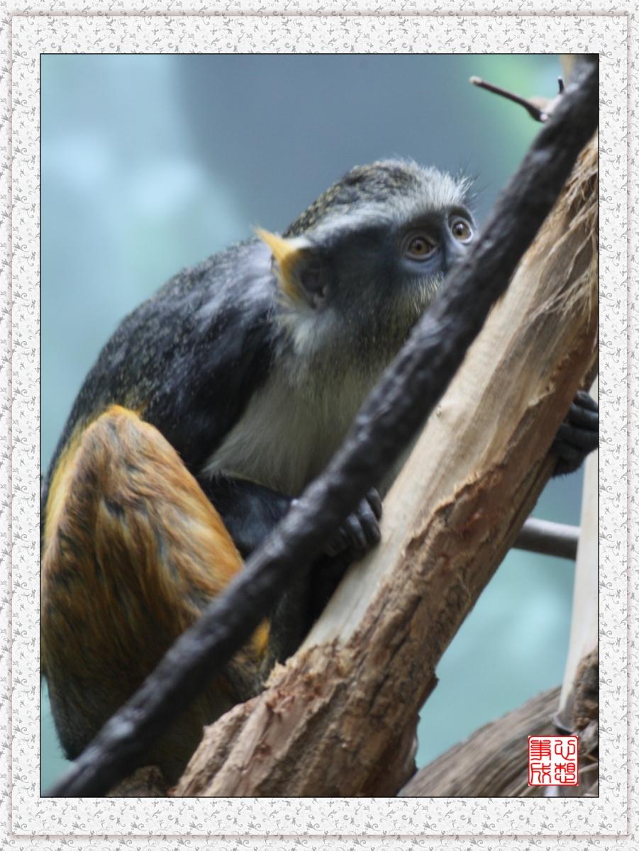 【心想事成】 人类的祖先?BRONX 动物园随拍_图1-8