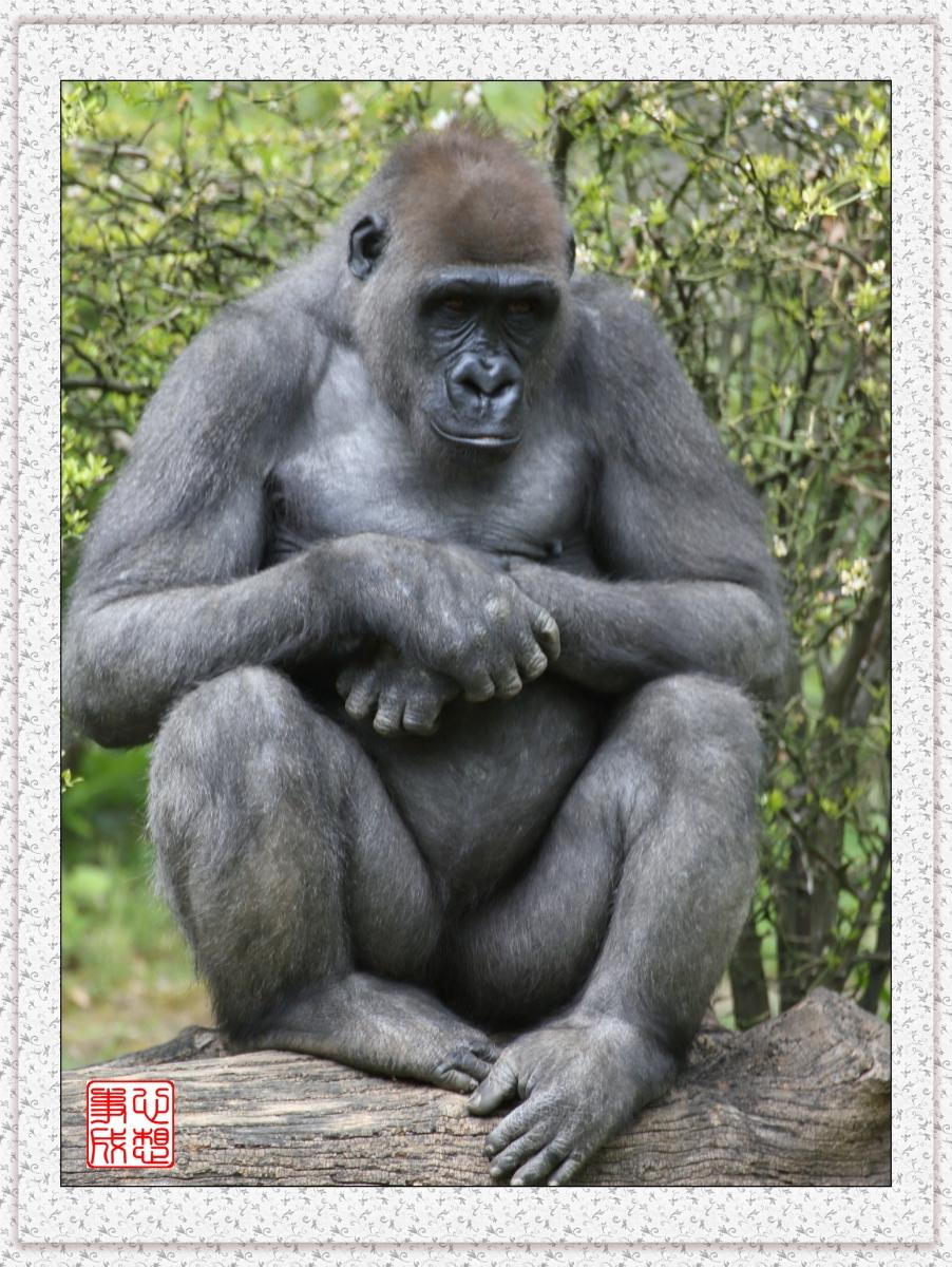 【心想事成】 人类的祖先?BRONX 动物园随拍_图1-18