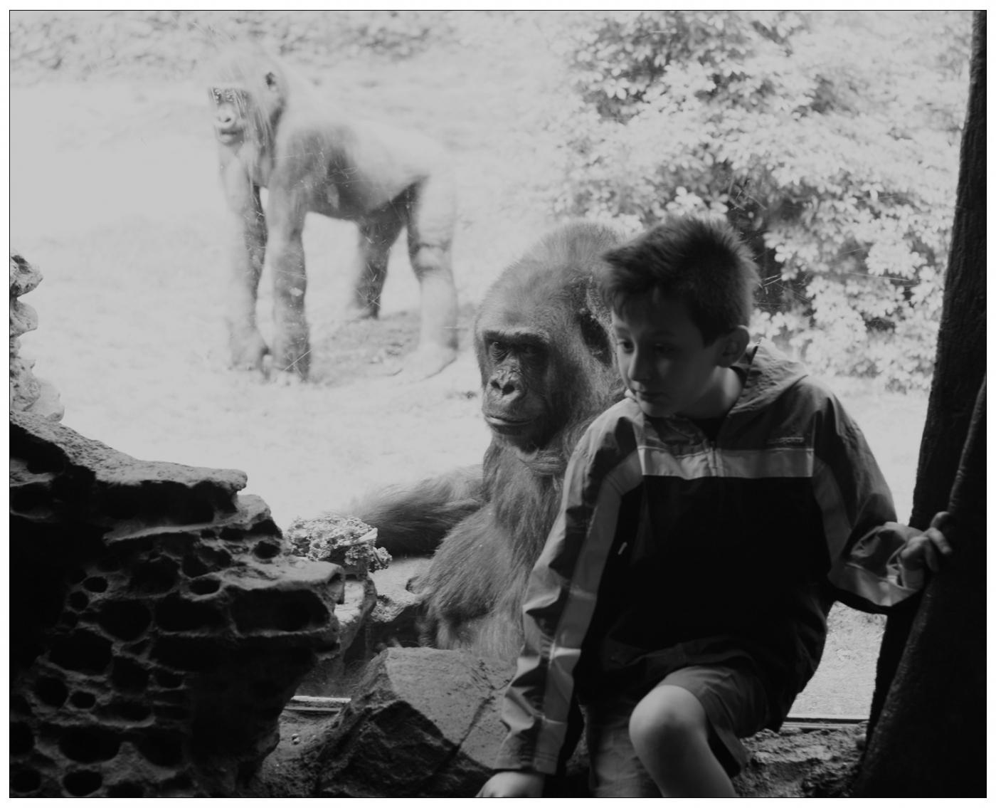【心想事成】 人类的祖先?BRONX 动物园随拍_图1-20