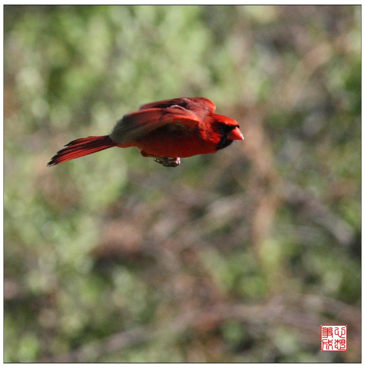 【心想事成】再拍红衣教主_图1-4