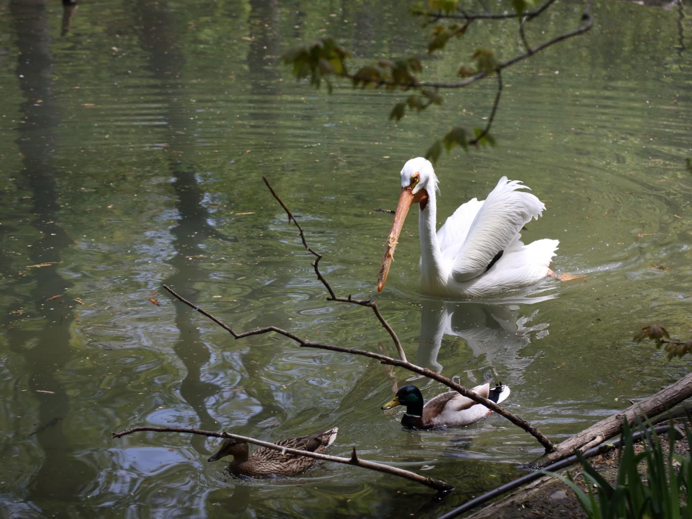 【心想事成】 BRONX 动物园随拍_图1-5
