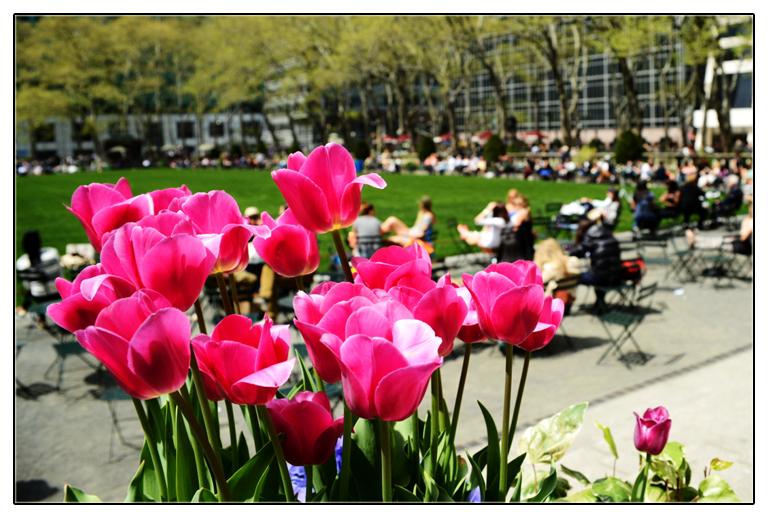 春回纽约_图1-1