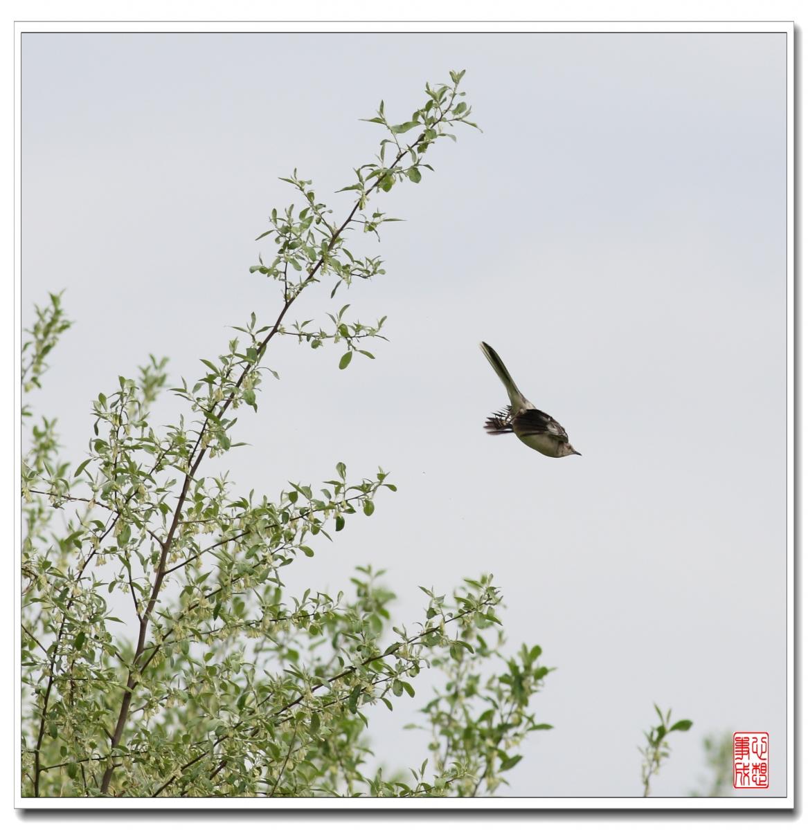 【心想事成】 飞鸟随拍图_图1-1