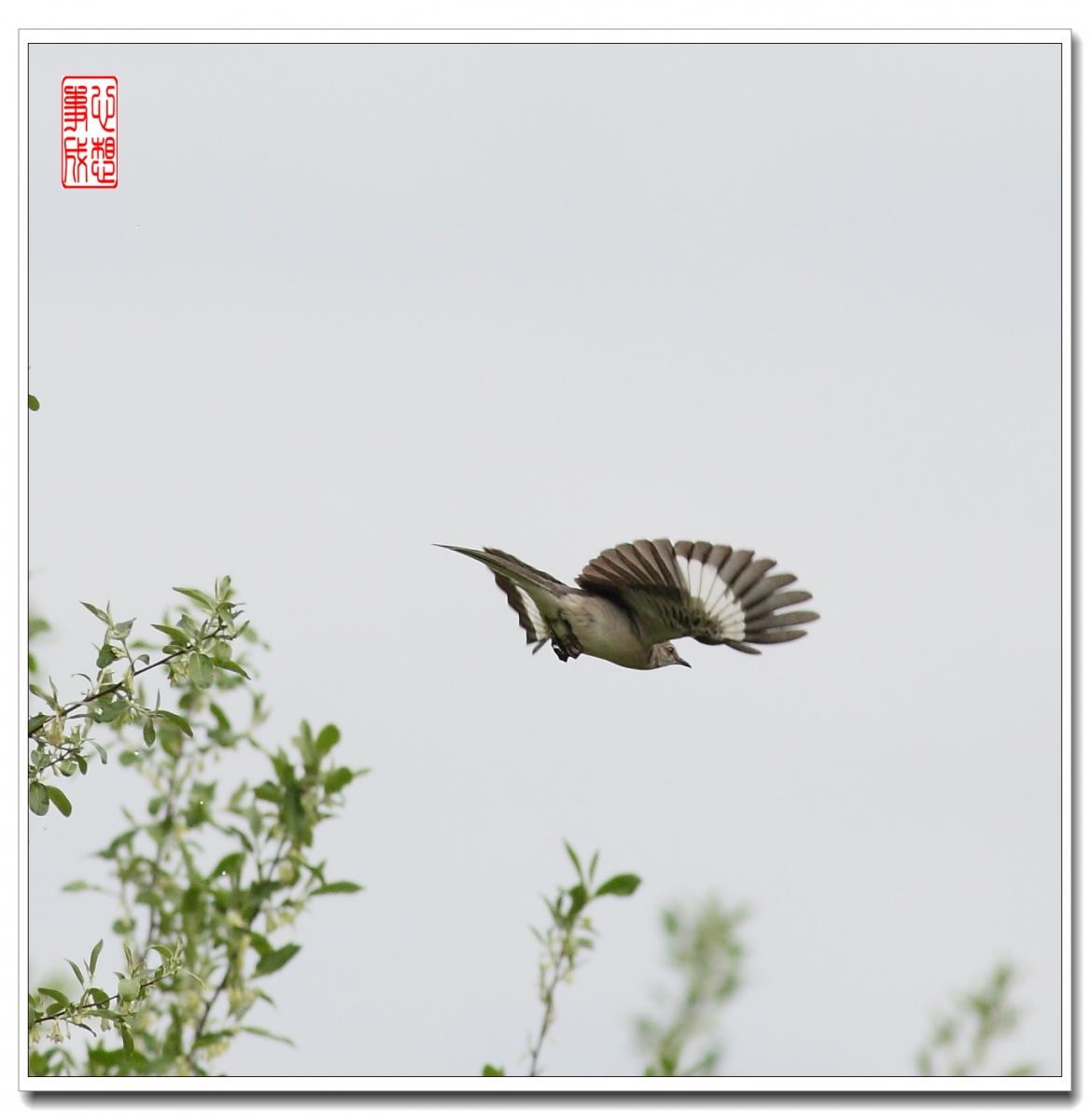 【心想事成】 飞鸟随拍图_图1-2