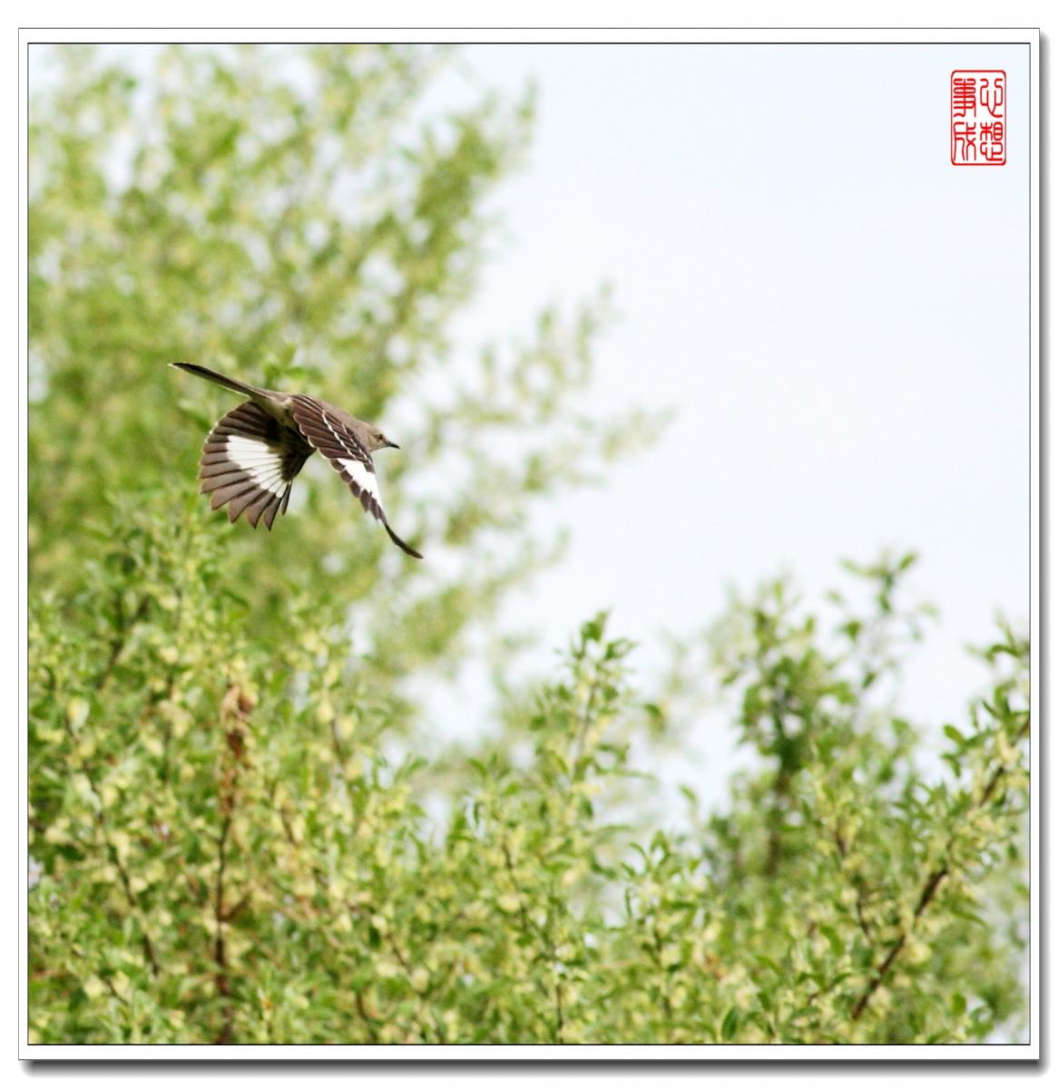 【心想事成】 飞鸟随拍图_图1-4