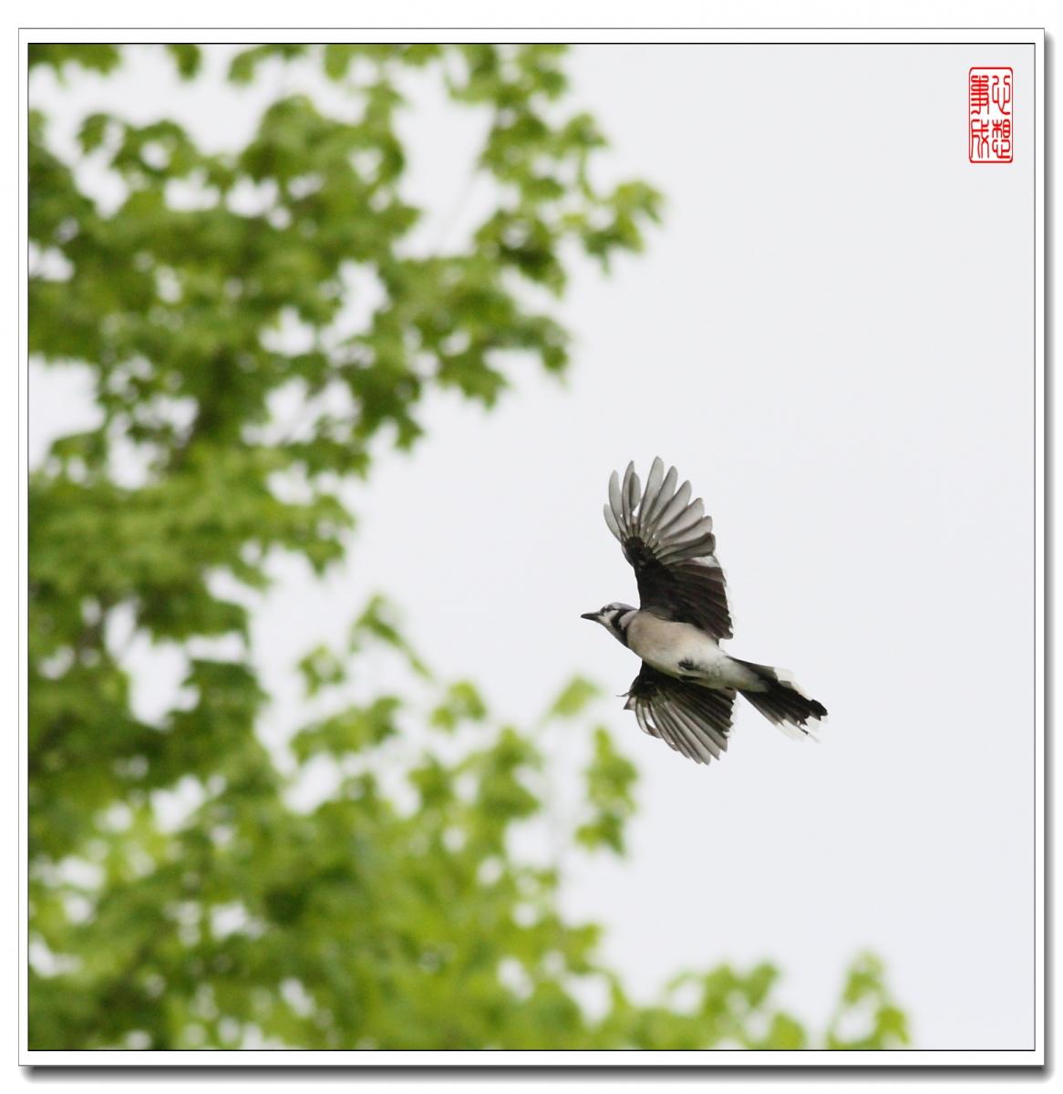 【心想事成】 飞鸟随拍图_图1-5