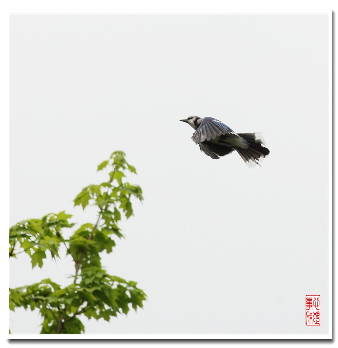 【心想事成】 飞鸟随拍图_图1-6