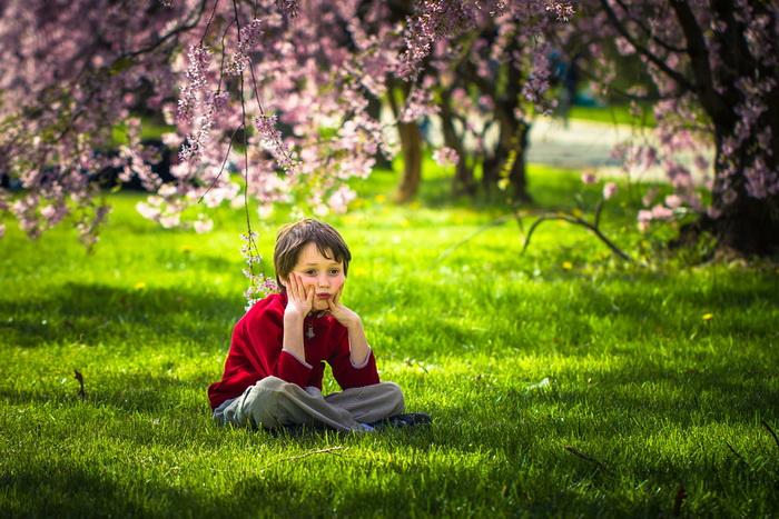 【自由鸟】樱花,如山间的雾,也如梦中的诗_图1-2