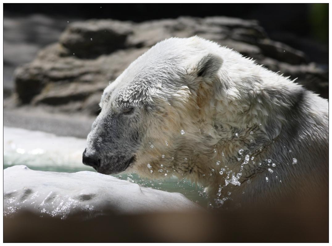 【心想事成】 BRONX 动物园随拍 2_图1-25