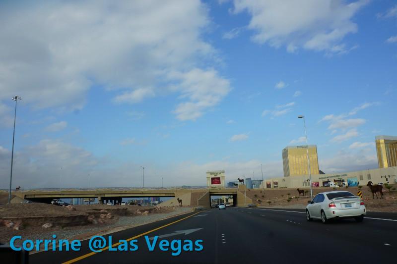 【C游记】纸醉金迷Vegas我来了!_图1-11