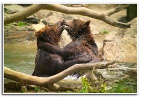 月影. 棕熊 18p