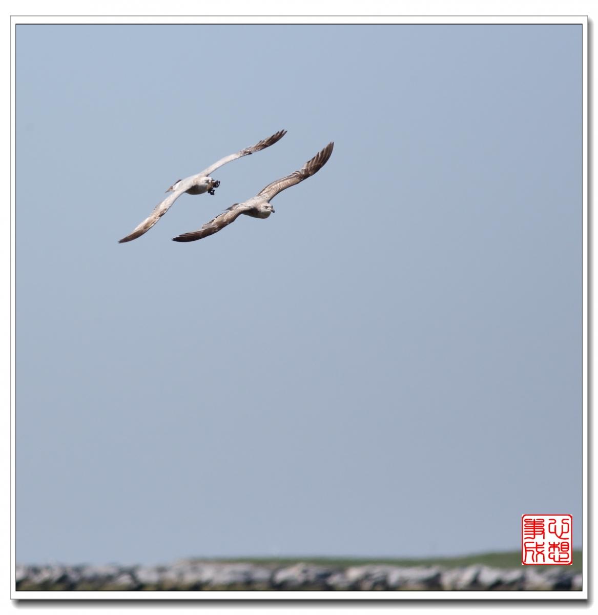 【心想事成】空中表演-海鸥_图1-1