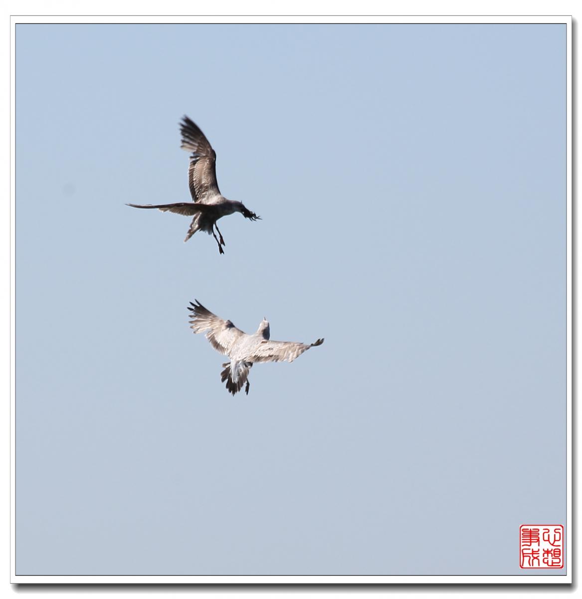 【心想事成】空中表演-海鸥_图1-8