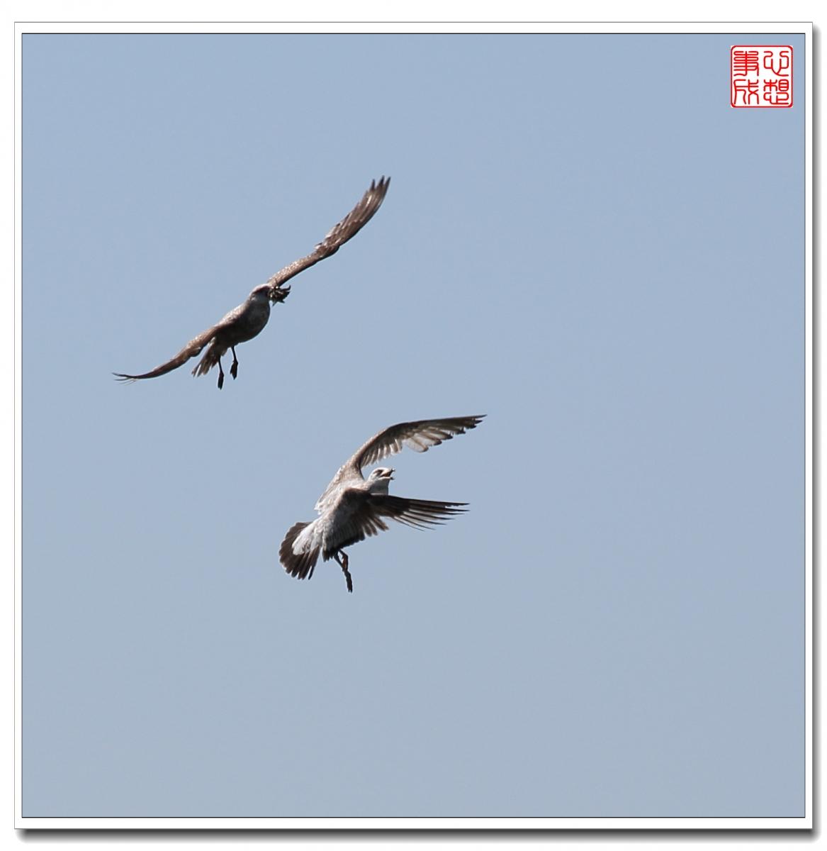 【心想事成】空中表演-海鸥_图1-11